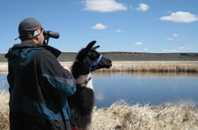 Sid looks for swans, a Bird Festival favorite.