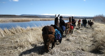 Steens Mountain is a beautiful backdrop for the Burns Llama Trailblazers Bird Festival Tours