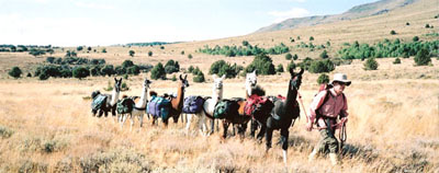 Packing on Steens Mtn. with Burns Llama Trailblazers