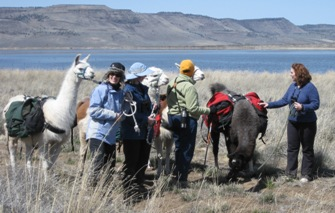 Enjoy a hike with Burns Llama Trailblazers